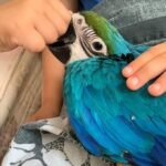 Macaw parrot for sale UK