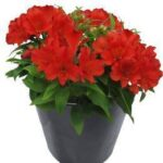 How to pick the right retailer to buy plants online?