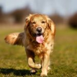 Best Pet Care Services in NYC | Four Bare Paws
