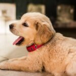 Best Puppy Sitters in NYC | Puppy Sitting Near Me | Four Bare Paws