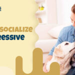 How To Socialize An Aggressive Dog?   Primal Needs